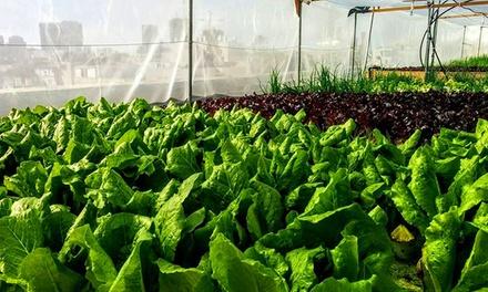 חקלאות עושים גם בעיר: כרטיס כניסה ליחיד לסדנת חקלאות עירונית של ירוק בעיר (על גג דיזנגוף סנטר) ב 59 ₪ בלבד